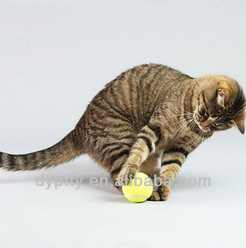 Cat_chasing_toy_balls.jpg