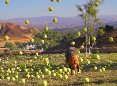 WATCH: Doggies With Big Tennis