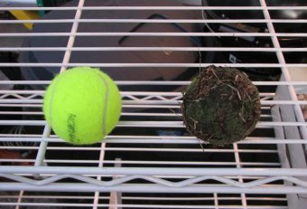Are tennis balls bad for dogs teeth