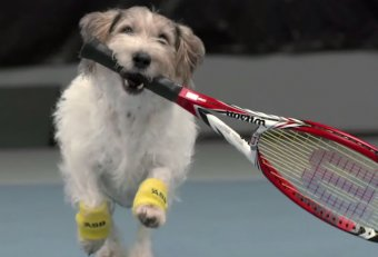 Are tennis balls good for Puppies