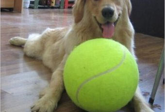 Big tennis balls for dogs