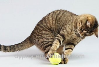 Cat chasing tennis ball