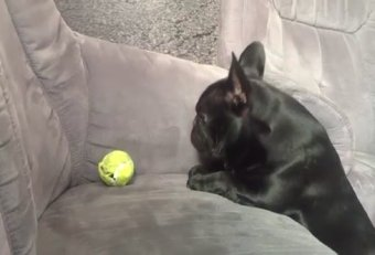 Dog tennis ball couch