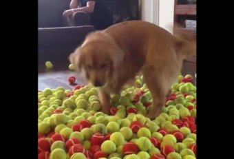 Dog tennis balls birthday