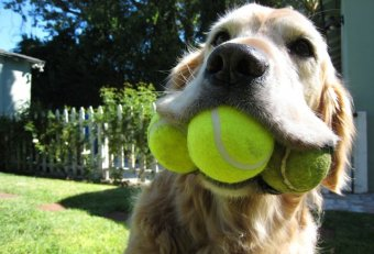 Dog tennis balls information