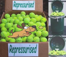 Used Tennis Balls For Dogs
