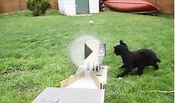 Automatic Dog Ball Launcher,
