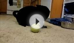 DIY Cat Toy: Tennis ball treat dispenser