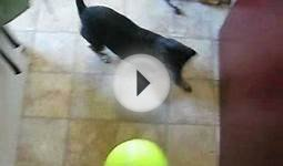 DOG ATTACKS GIANT TENNIS BALL