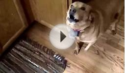 Dog begs to go for a walk in dog language