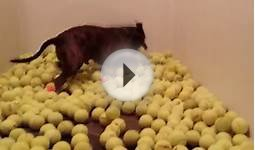 Dog can never have too many balls