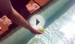 Dog swims under water to fetch tennis ball