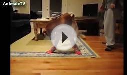 Funny Dogs In Shoes - Dogs Walking with Boots for the