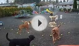 Tennis balls and dogs flying everywhere at Happy Puppy park
